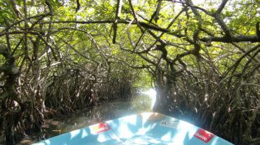 Mangrive river safari