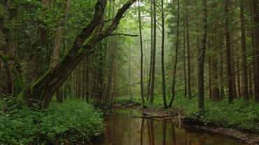 Udewekala forest reserve